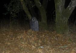My 'grave'